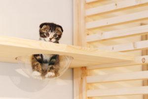 ひとり猫カフェにあにゃあきくらげ