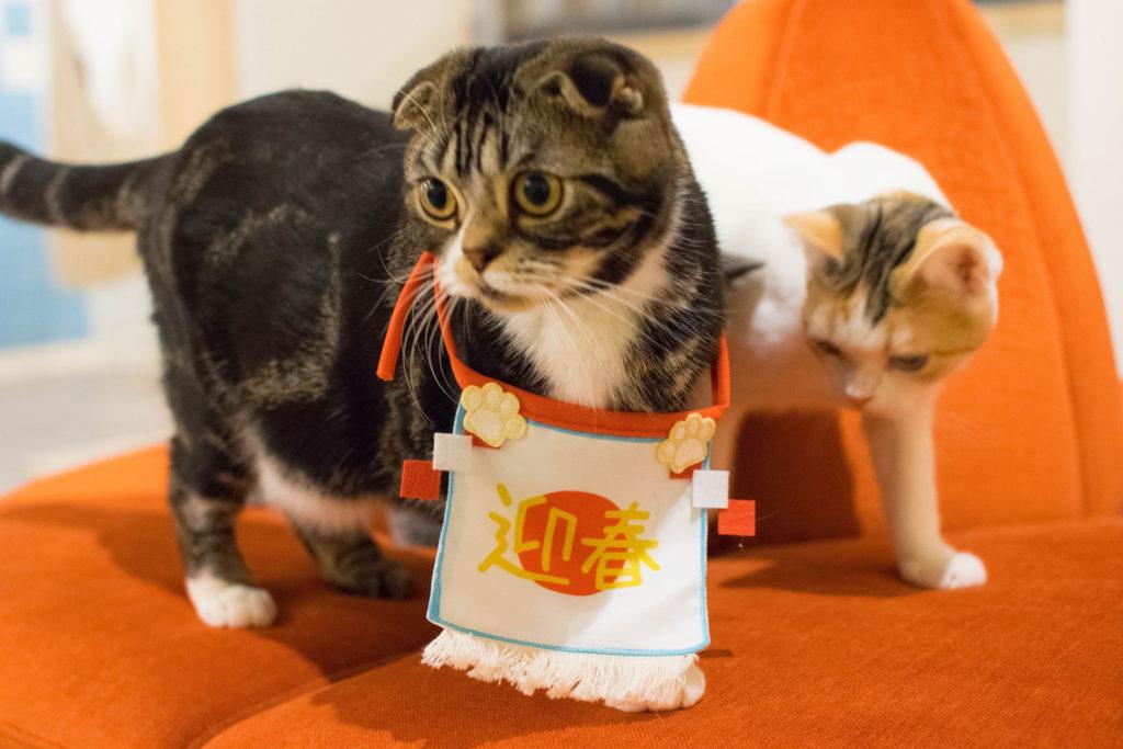 ひとり猫カフェにあにゃあ大阪梅田