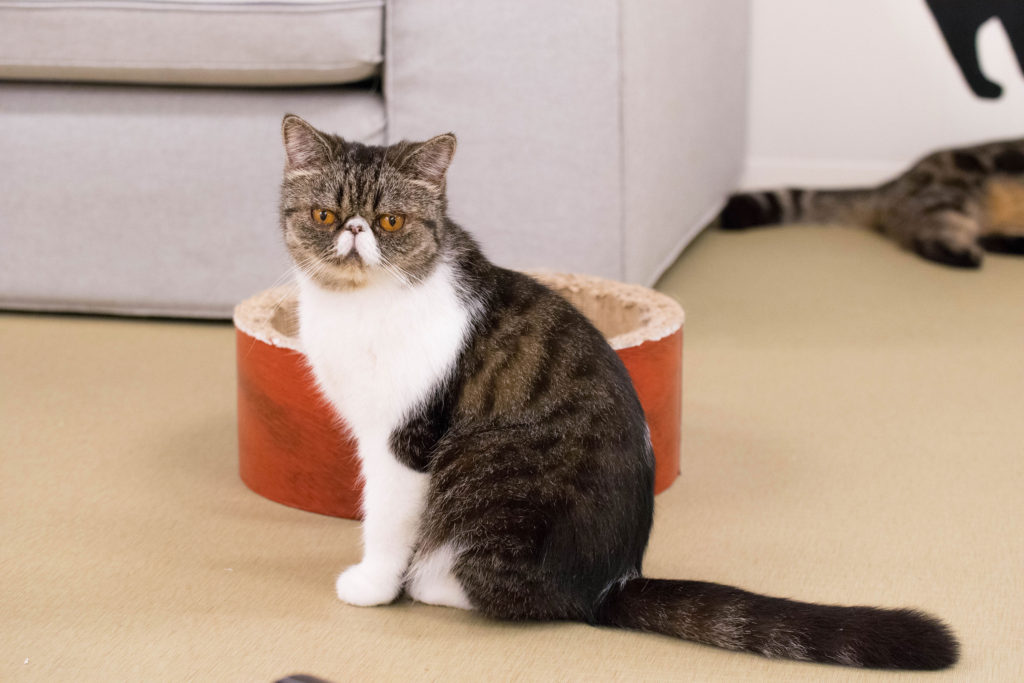 猫紹介わかめ