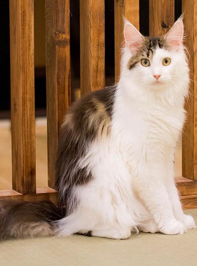 梅田の猫カフェにあにゃあアリス