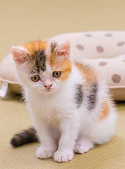梅田の猫カフェにあにゃああずき