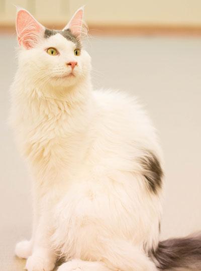 梅田の猫カフェにあにゃあガク