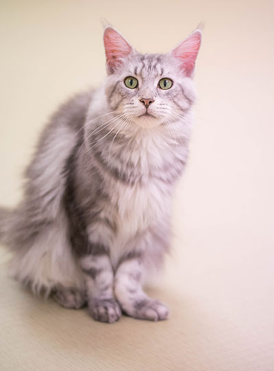 梅田の猫カフェにあにゃあごん
