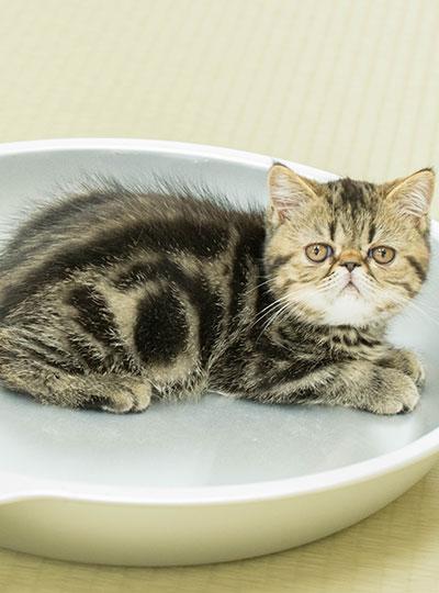 梅田の猫カフェにあにゃあこんぶ