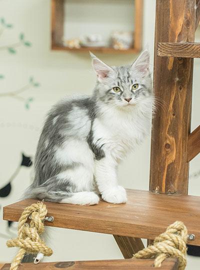 梅田の猫カフェにあにゃあクレタ