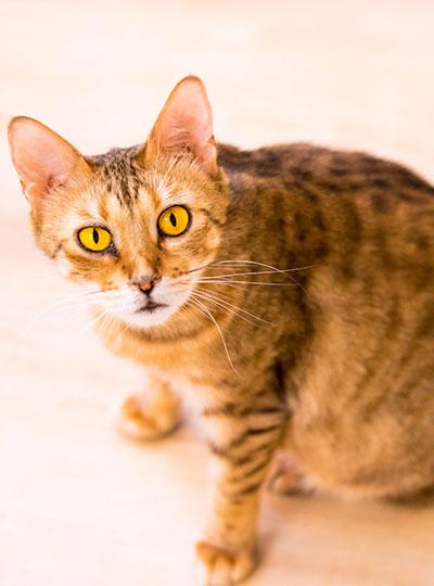梅田の猫カフェにあにゃあリリー