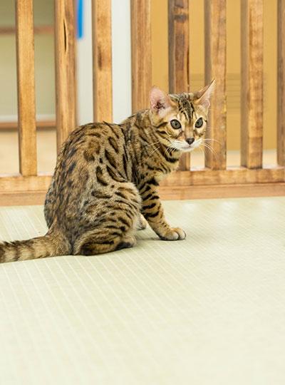 梅田の猫カフェにあにゃあまるた
