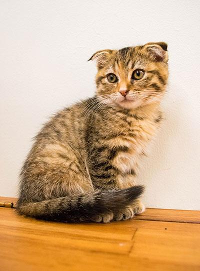 梅田の猫カフェにあにゃあもなか