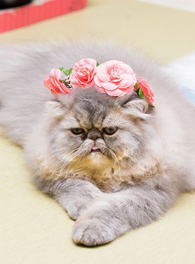 梅田の猫カフェにあにゃあもずく