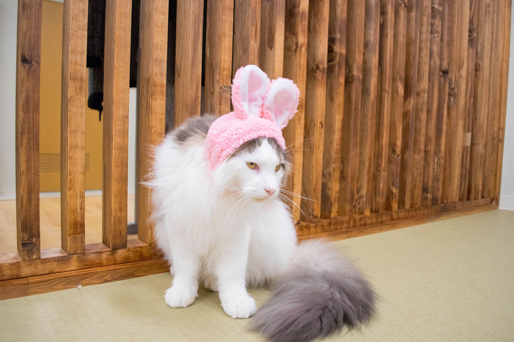 大阪梅田の猫カフェにあにゃあうさレオン
