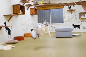 大阪梅田猫カフェにあにゃあジャンプクレタ