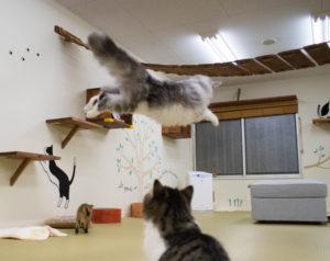 大阪梅田猫カフェにあにゃあジャンプクレタ2