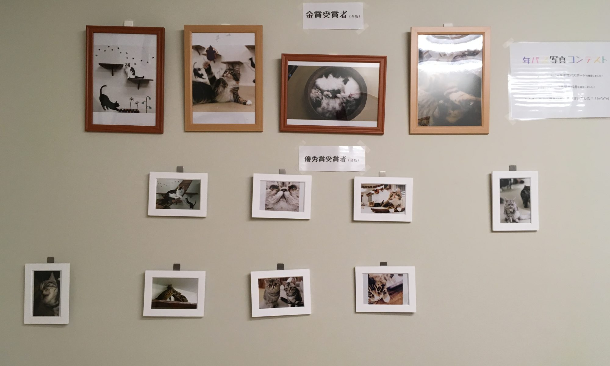 大阪梅田の猫カフェにあにゃあ写真コンテスト作品