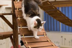 大阪梅田の猫カフェにあにゃあアリス梯子