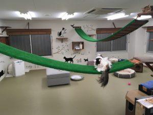 大阪梅田の猫カフェにあにゃあ芝生店内