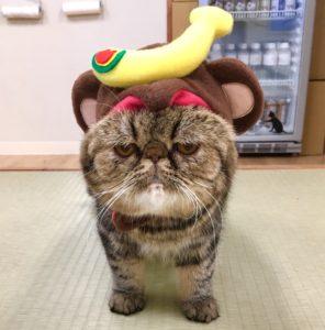 大阪梅田の猫カフェにあにゃあ