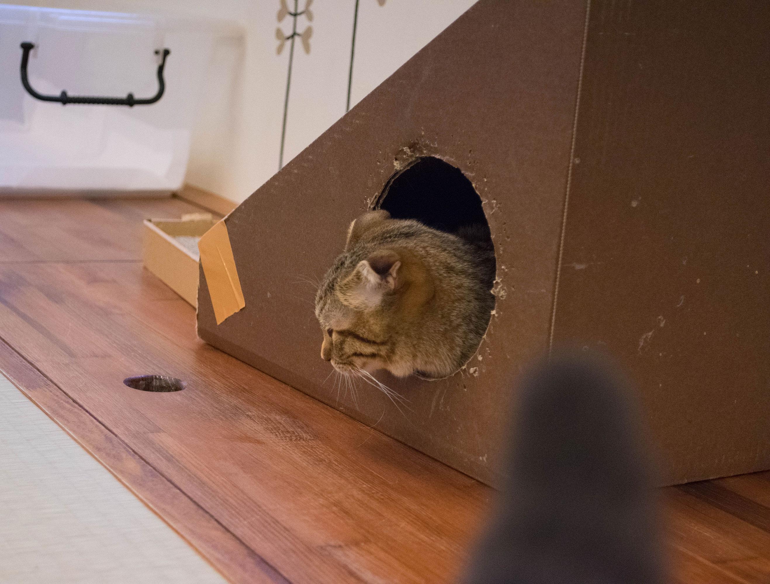 大阪梅田の猫カフェにあにゃあもなかうたた寝