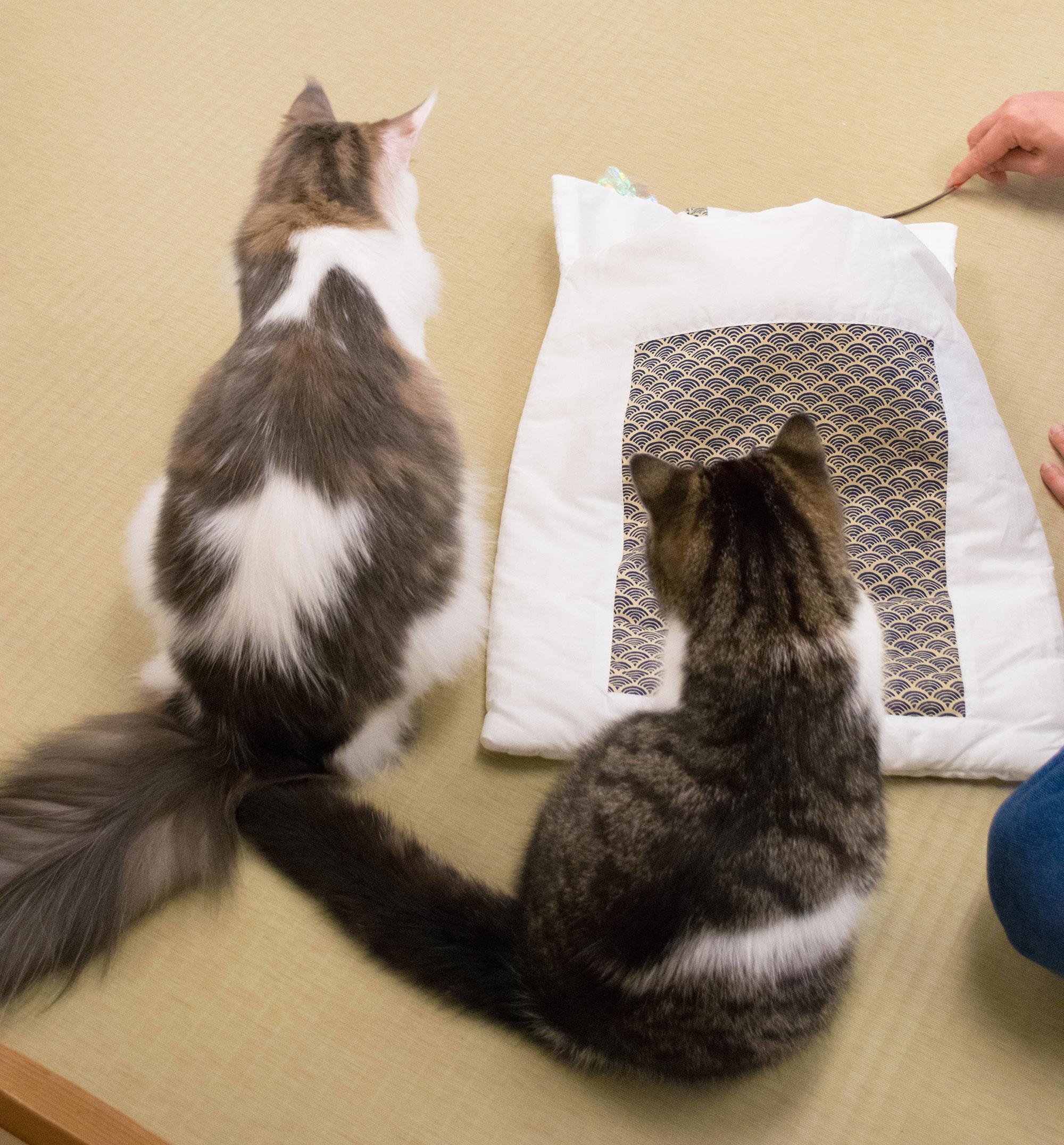 大阪梅田の猫カフェにあにゃあお布団