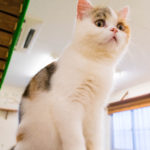 大阪梅田の猫カフェにあにゃああずきω