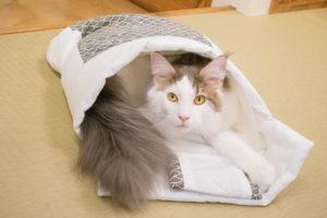 大阪梅田の猫カフェにあにゃあお布団レオンドヤ顔