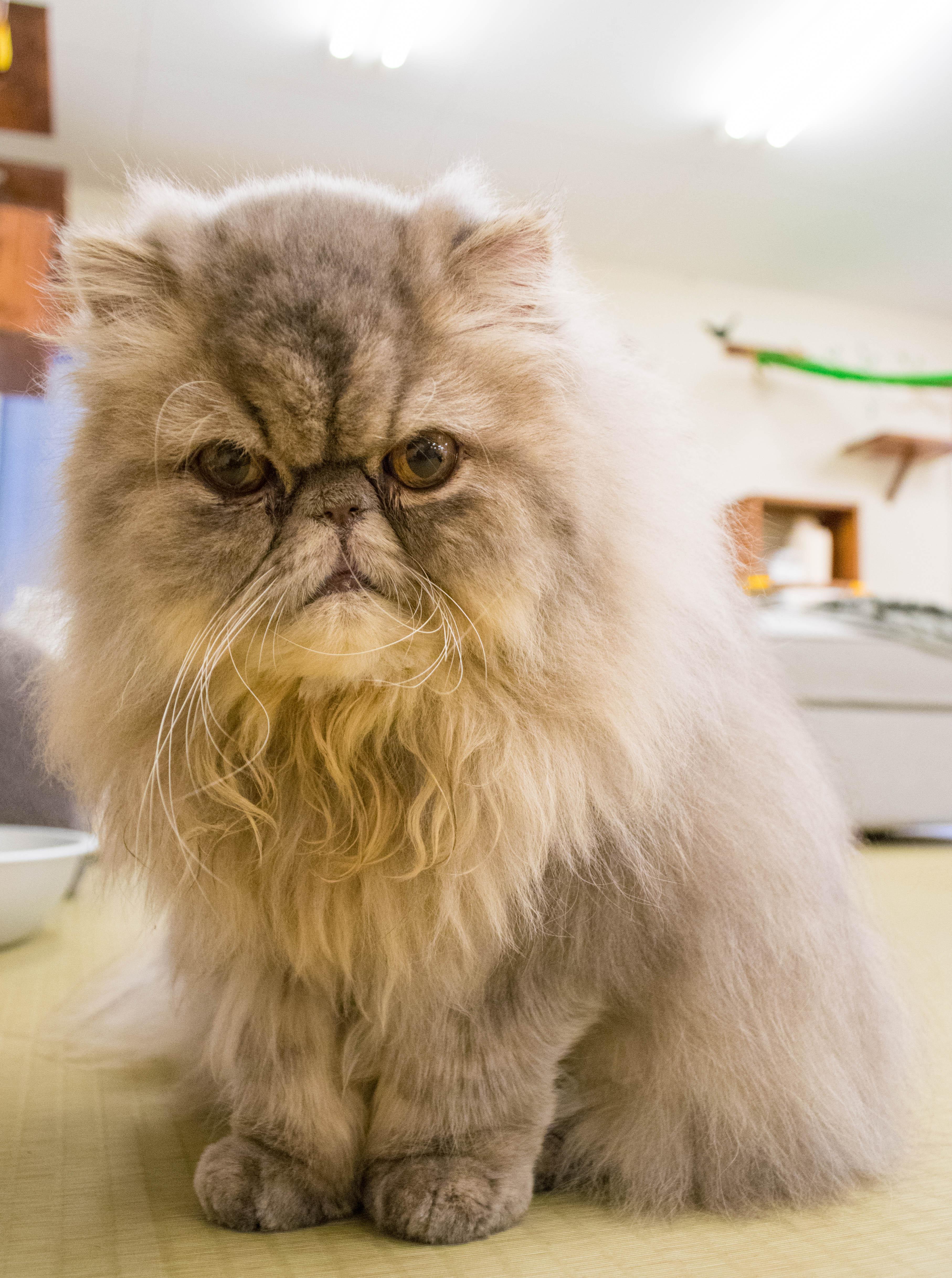 大阪梅田の猫カフェにあにゃあもずく