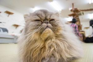 大阪梅田の猫カフェにあにゃあもずくアップ