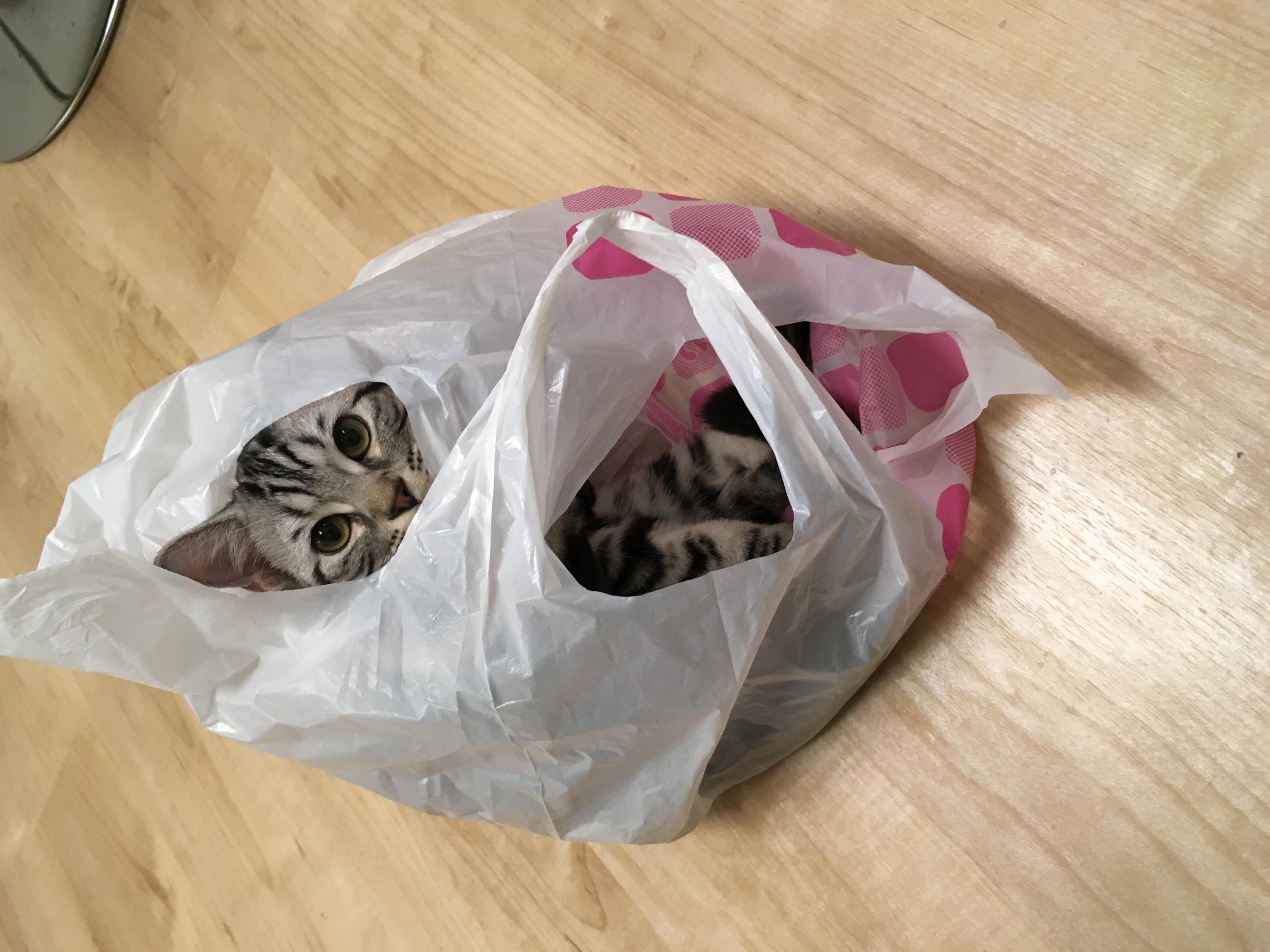 大阪梅田の猫カフェにあにゃあ袋入り