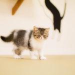 大阪梅田の猫カフェにあにゃあわかめ幼少期