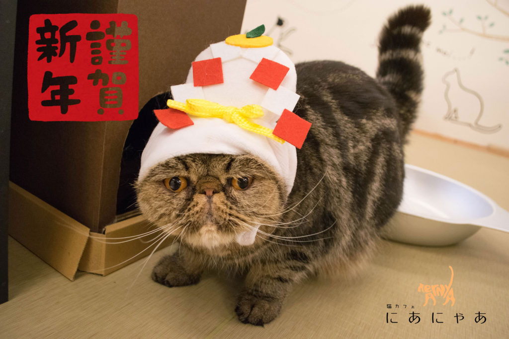 猫カフェにあにゃあ大阪梅田ロゴ